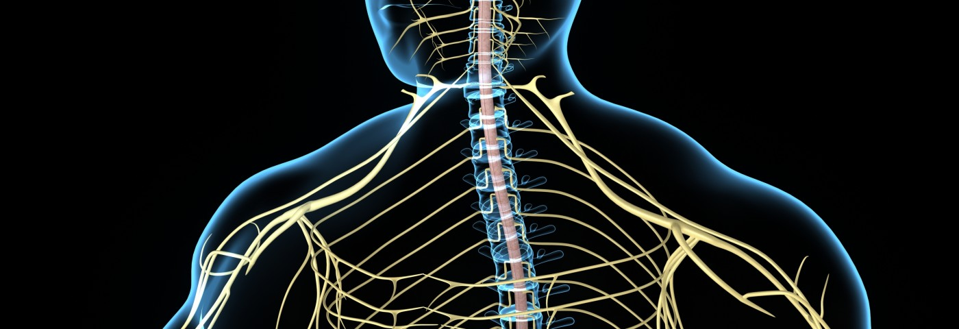Fibromyalgia Pain May Also Result from Neurogenic Inflammation of Peripheral Nerves, Review Argues