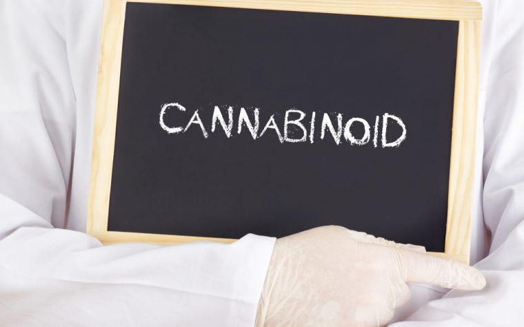Cannabinoid receptors might help fibromyalgia