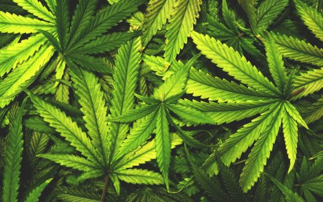 Zynerba Launches Trial to Study Effects of Cannabinoid Product ZYN001