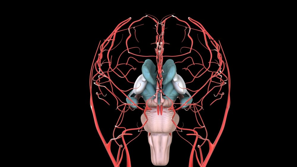 Study links aortic stiffness with lower cerebral blood flow
